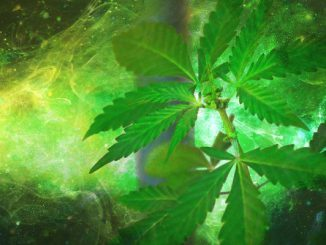 weed_and_movie